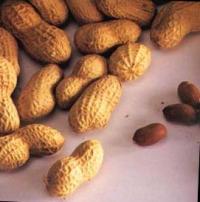 Erdnüsse oder Mani sind ein proteinreiches Nahrungsmittel