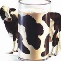 Die Milchproteine hängen von der Kuhart ab