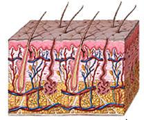 Ein Protein verbindet Diabetes und Exzeme