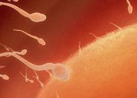 Mit der Fruchtbarkeit verbundenes Protein