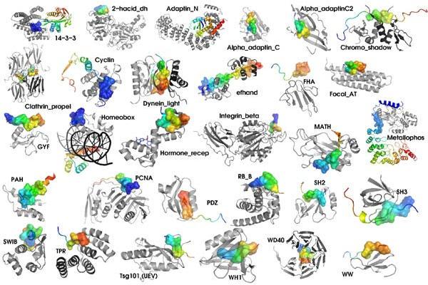 Mehrere Molekültypen bilden Proteine